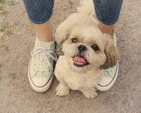 Dog's paw feet next to the owner -- walking together Royalty Free Stock Photos
