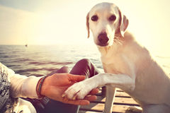 Dog's paw and man's hand gesture of friendship Royalty Free Stock Image
