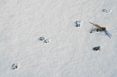 Dog's paw prints on snow Royalty Free Stock Photos