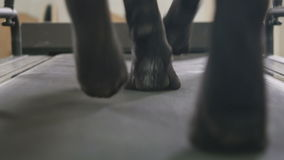 Dog`s paws walks on the treadmill stock video footage