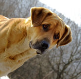 Dog's portrait Royalty Free Stock Images
