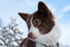 Dog's portrait Stock Photography