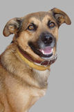 Dog's portrait. Royalty Free Stock Photos