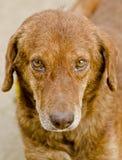 A dog's portrait Stock Image