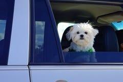 Dog's smile Royalty Free Stock Photo