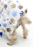 Dog's Tail Under Bathrobe. Close-up of a dog's tail sticking out of their paw print bathrobe Stock Images