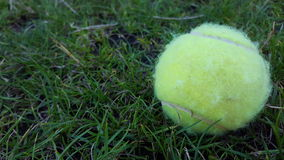 The Dog's Tennis Ball Royalty Free Stock Images