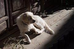 Dog sad. Dog in China is very sad Royalty Free Stock Photo