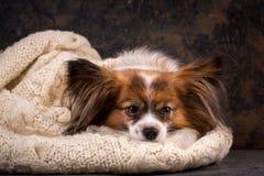 The dog is sad alone, close-up
