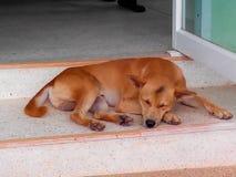 The dog. Sad alone desolation color brown Stock Images
