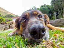 Dog with sad eyes. With a landscape background Royalty Free Stock Photography