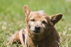 Dog Sad Stock Images