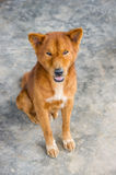 Dog sad homeless. Stock Photos