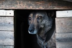 Dog with a sad look in a dark box.  royalty free stock photography