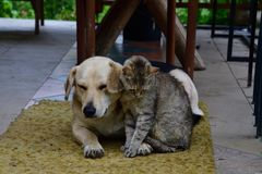 Dog sadness in eyes portrait. Cat and dog to lounge together as a best friends sadness in eyes Stock Images