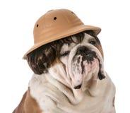 Dog on safari Stock Photos