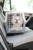 Dog safe in the car. Small dog maltese sitting safe in the car on the back seat in a safety crate Stock Images