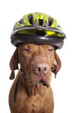 Dog safety matters Stock Photos