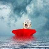 Dog sailing in upside-down red umbrella Stock Photo