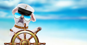 Dog sailor holds ship steering wheel in the sea background. Royalty Free Stock Photography