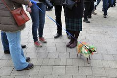 Dog at Saint Patrick`s Day celebration in Moscow Royalty Free Stock Photography