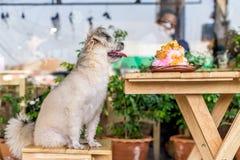 Dog sammanträde i kafét som väntar för att äta en issnöflinga royaltyfria foton