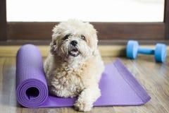 Dog sammanträde på en matt yoga och att koncentrera för övning och liste Arkivbilder