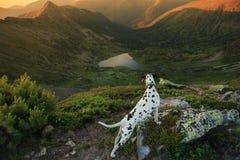 Dog sammanträde på en vagga vid en bergsjö royaltyfri foto