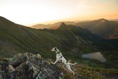 Dog sammanträde på en vagga vid en bergsjö royaltyfria foton