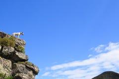 Dog sammanträde på en vagga vid en bergsjö royaltyfri bild