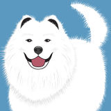 Dog samoyed, buddy puppy vector. Illustration vector illustration