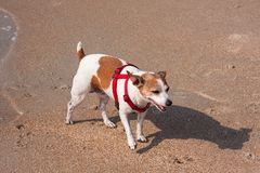 Dog On The Sand Royalty Free Stock Photography