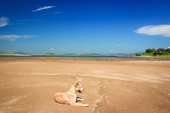 Dog on the sand Royalty Free Stock Images