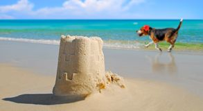 Dog Sand Castle by Beautiful Ocean Stock Photo
