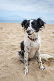 Dog in sand Royalty Free Stock Images