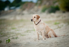 Dog on sand Stock Image