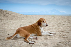 Dog in sand Royalty Free Stock Image