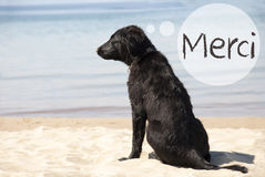 Dog At Sandy Beach, Merci Means Thank You Royalty Free Stock Photography