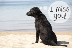 Dog At Sandy Beach, Text I Miss You Royalty Free Stock Photography
