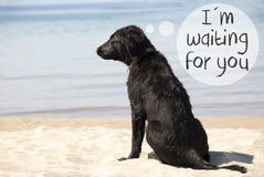 Dog At Sandy Beach, Text I Am Waiting For You Royalty Free Stock Photos