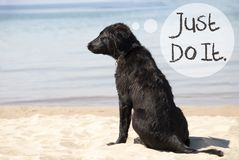 Dog At Sandy Beach, Text Just Do It Stock Photo