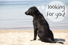Dog At Sandy Beach, Text Looking For You Royalty Free Stock Images