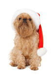 Dog Santa Royalty Free Stock Image