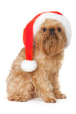 Dog Santa Royaltyfria Bilder