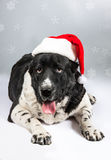 Dog in Santa Claus hat Stock Images
