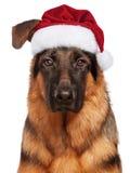 Dog in Santa Claus hat Royalty Free Stock Photo