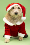 Dog In Santa Costume Stock Images