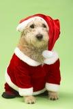 Dog In Santa Costume. Studio Portrait Of Dog In Santa Costume Royalty Free Stock Image