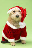Dog In Santa Costume Royalty Free Stock Image