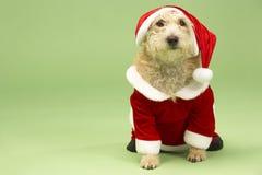 Dog In Santa Costume. Studio Portrait Of Dog In Santa Costume Stock Image